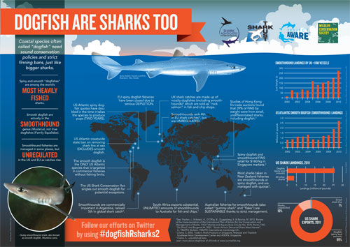 Dogfish are sharks, too